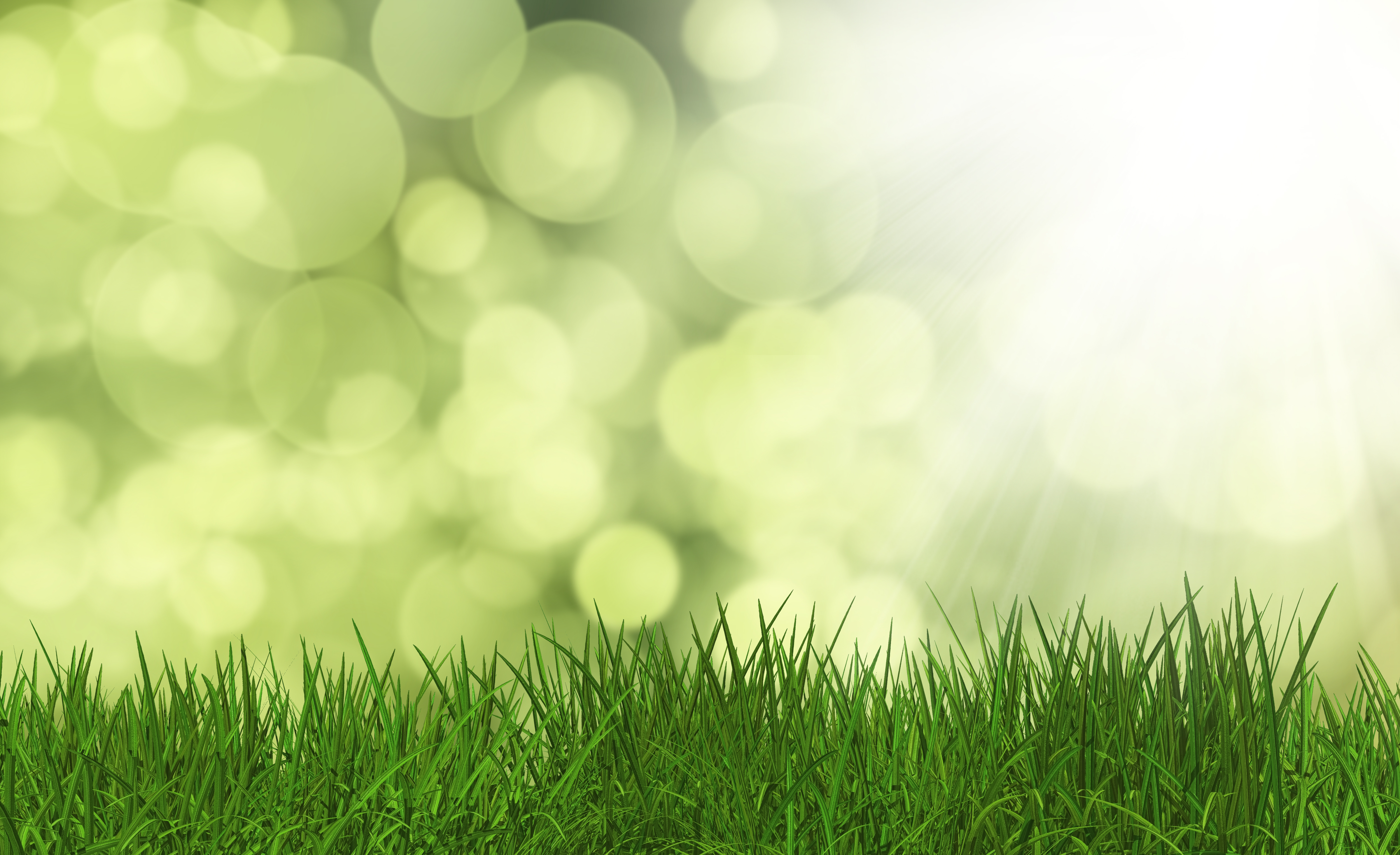 3D render of lush green grass on a defocussed background